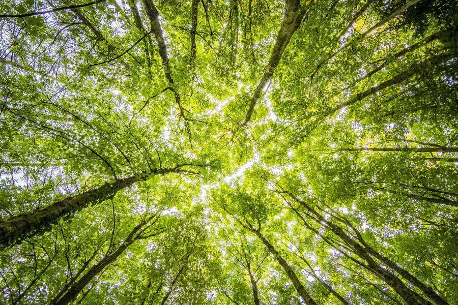 Δάσος με όψη από κάτω