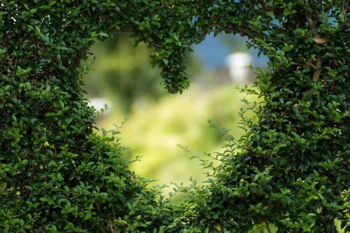Καρδιά σε βλάστηση